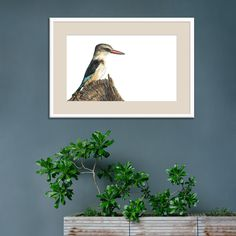 """""""Expectation"""" Brown-hooded Kingfisher Watercolour Original SOLD, but limited edition, archival quality fine art prints available online. 🌍 World-wide shipping available! #birdsofsouthafrica #watercolourist #homedecor 🇿🇦 The Happy Struggling Artist Kingfisher, Modern Artwork, Wildlife Art, Bird Art, Watercolour Painting, Original Artwork, Fine Art Prints, Brown, Happy"""