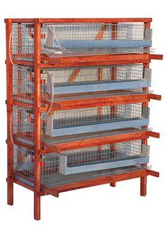 Wexford Quail- Quail in Ireland, Quail eggs, Quail meat: Few words about quail cage