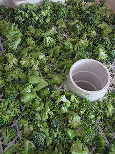 Food Storage - Dehydrating Broccoli