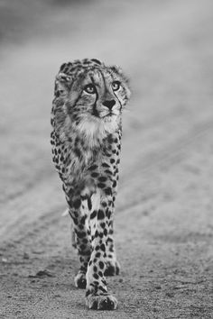 Now that I've done that.. I'm branded a cheeta forever.. I walk, talk, breathe... as tho that's a loving way to be.. #GodSetMeFree