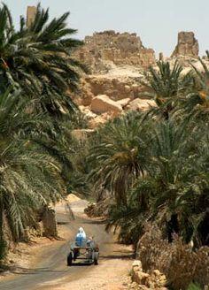 Guide till Siwaoasen | LundinOrient´s Egypten