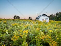 house in wild field - A house amongst a field of wildflowers and weeds.