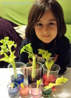 experiment api i colorant Science Week, Science Experiments Kids, Teaching Science, Science For Kids, Science Projects, Activities For Kids, Science Electricity, Reggio Emilia, Fun Learning