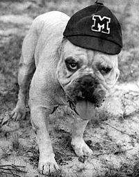 Bully I---First MSU bulldog mascot...I have this framed print