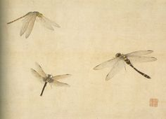 Dragonflies from an album of paintings by Mori Shunkei, (Japanese, active 1800–20). From Stephen Ellcock FB