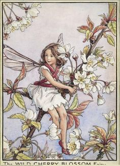 Cicely Mary Barker - Flower Fairies of the Trees