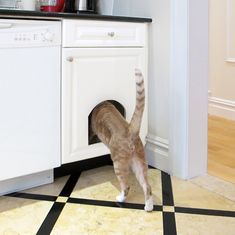 DIY tutorial on how to create a concealed cat litter box within a kitchen cabinet. Article includes advice on kitty litter, accessories and odor control. Cat Care Tips, Pet Tips, Dog Care, Litter Box Enclosure, Cat Scratching Post, Bedroom Red, Furniture Placement, Cat Furniture, Best Interior Design