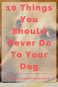 10 Things You Should Never Do To Your Dog. #dogtrainingadvicetips #dogcare #doghealth #dogtips #dogs Cute Disney Pictures, Dog Health Tips, Dog Facts, Dog Accessories, Dog Photos, Dog Care, Dog Friends, Never, Dog Training