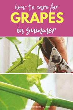 Grapevines are rampant plants that need to be kept under control. Garden Trellis, Garden Planters, Garden Beds, Potager Garden, Organic Gardening, Gardening Tips, Sustainable Gardening, Prune Fruit, Growing Grapes