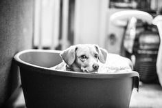 Dog photography by Mariiana Capela  #dog #bruxelles #brussels #belgique #belgium
