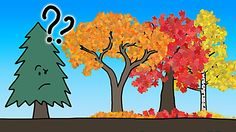 An Animation That Vividly Explains the Real Reason Why Leaves Change Color in the Fall