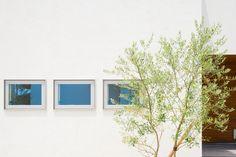 白い壁と植栽。玄関へのアプローチに植えたオリーブが力強く葉を広げてきました。外からはプライバシーで目隠し、中からは景観と、ちょうどいい高さに育ってくれてます。 #白壁 #塗壁 #左官壁 #植栽 #造園 #シンボルツリー #オリーブ #目隠し #アイストップ #板貼り #経年変化 #経年美化 #設計事務所 #コラボハウス #香川 #愛媛