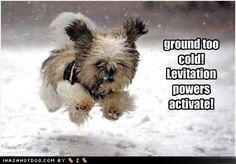 sayings about the cold weather | funny-dog-pictures-ground-cold.jpg