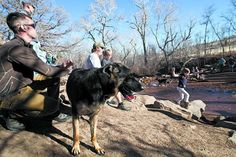 What dog-lovers must know, and where they should go in Colorado Springs #coloradosprings #dogpark