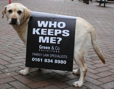 Canine Advertising