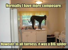 funny great dane pictures with captions | Has A Hotdog - great dane - Loldogs n Cute Puppies - funny dog ...