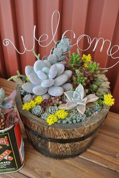 succulent gardens are a perfect way to spruce up your patio! This is calling my name Growing Succulents, Succulents In Containers, Planting Succulents, Planting Flowers, Succulent Landscaping, Succulent Arrangements, Succulent Terrarium, Garden Trees, Plant Decor