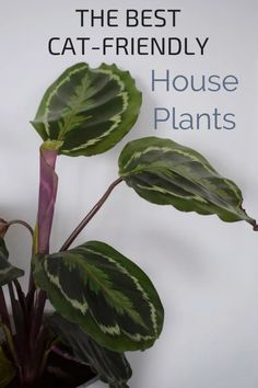 A guide to the prettiest cat safe non toxic house plants. pretty Plants that are not toxic to pets, cat safe house plants