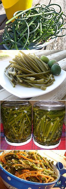 fresh to pickled/preserved. Looks crunchy and delicious! Georgian Food, Russian Recipes, Vegetable Salad, Canning Recipes, Korean Food, Superfood, My Favorite Food, Food Dishes, Pickles