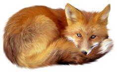 Fox by LOVEMAYU