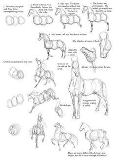 Oh man I need this I'm hopeless at drawing horses