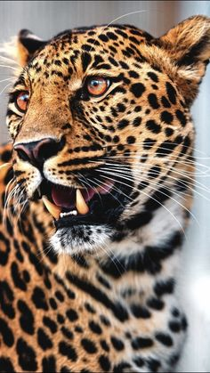 Please Check us out! Please Check us out!YoungBloodFis… Young Blood Fishing Y - Jungle Animals, Animals And Pets, Cute Animals, Beautiful Cats, Animals Beautiful, Beautiful Pictures, Animal Kingdom, Gato Grande, Exotic Cats