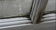 Mold just don't wait, a minute of dampness on your window and there they are. In fact, if you have never experienced mold before, you might just think it's a stain on your wall or window panes.