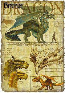 [Fantasy art] Bronze Dragon by mausfoot at Epilogue Magical Creatures, Fantasy Creatures, Fantasy Dragon, Fantasy Art, Dragon Rey, Dragon Book, Dragon Oriental, Dragon Anatomy, Bronze Dragon