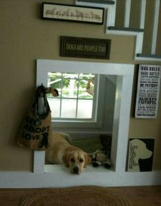 Under the stairs dog house. Everyone should think about this for their poo poo