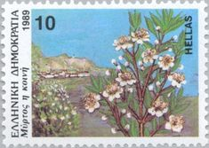 Myrtus communis (common myrtle) (Greek Flora and Fauna) . Greek Flowers, Wild Flowers, Forest Mountain, Flower Stamp, Tree Forest, Flora And Fauna, Flowering Trees, Myrtle, Postage Stamps