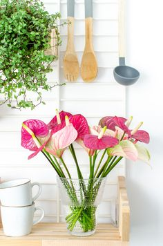 Pink anthurium flowers in the kitchen Green Kitchen, Silk Flowers, Cool Kitchens, Flower Power, Pink And Green, Glass Vase, Bouquet, Amazing, Interior