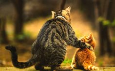 cool Baby cat blurred love animals kittens