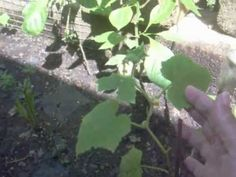 HOW TO GARDEN BED. MI JARDIN DEL PATIO. http:youtube.com/user/nereidapr1