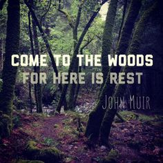 Come to the Woods, for Here is Rest