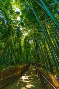 Bamboo forest - Arashiyama, Kyoto, Japan