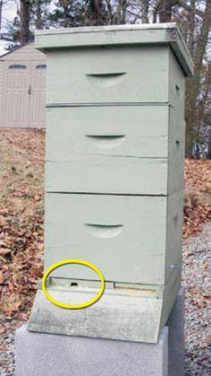 raising-honey-bees