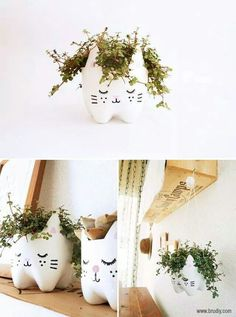 Cat face plant pots
