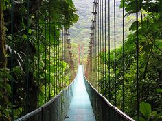 travelingcolors:  Monteverde | Costa Rica (via westeastsouthnorth)