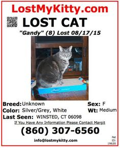 MISSING Not a Stray, Not Homeless last seen on Monday August 17, 2015.  Female, gray,dark stripes, off white stomach,tabby,medium size,12 lbs.,