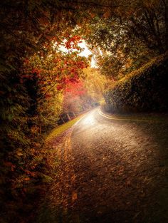 """Love that this isnt the typical """"road with trees"""" picture. The slight slant makes its beautiful."""