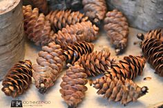 Drying pine cones 2 Bake 200 for 30 minutes to kill bugs and end sap