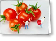 Tiny People Big World Greeting Cards - Chefs and cherry tomatoes little people on food Greeting Card by Paul Ge