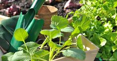11 easy vegetables to grow. One in three US households are nowgrowing foodat home! Are you?