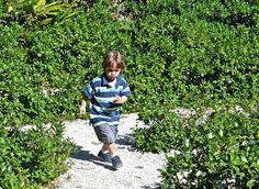 Vizcaya Museum and Gardens in Miami Florida http://travelexperta.com/2013/01/vizcaya-museum-gardens-miami-florida.html #miami #museum #travel