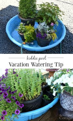 Save your planted pots - and your sanity - with this easy vacation watering tip for your summer garden.