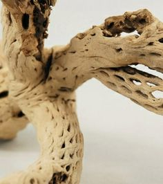 """Exotic Wood: 12 -15"""" Cholla Tree Branch (untreated)"""