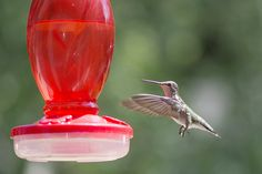 Humming bird at 1/1600th of a second