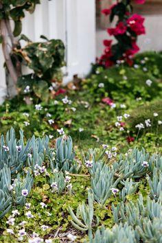 Dover Heights Australian Garden Design, Australian Native Garden, Contemporary Garden Design, Backyard Pool Designs, Backyard Garden Design, Backyard Ideas, Outdoor Ideas, Backyard Retaining Walls, Patio