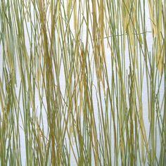 Varia Ecoresin | Organics | Bear Grass 50 Percent | Materials | 3form
