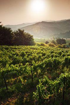 #PoderideiColli vini tipici delle #Marche